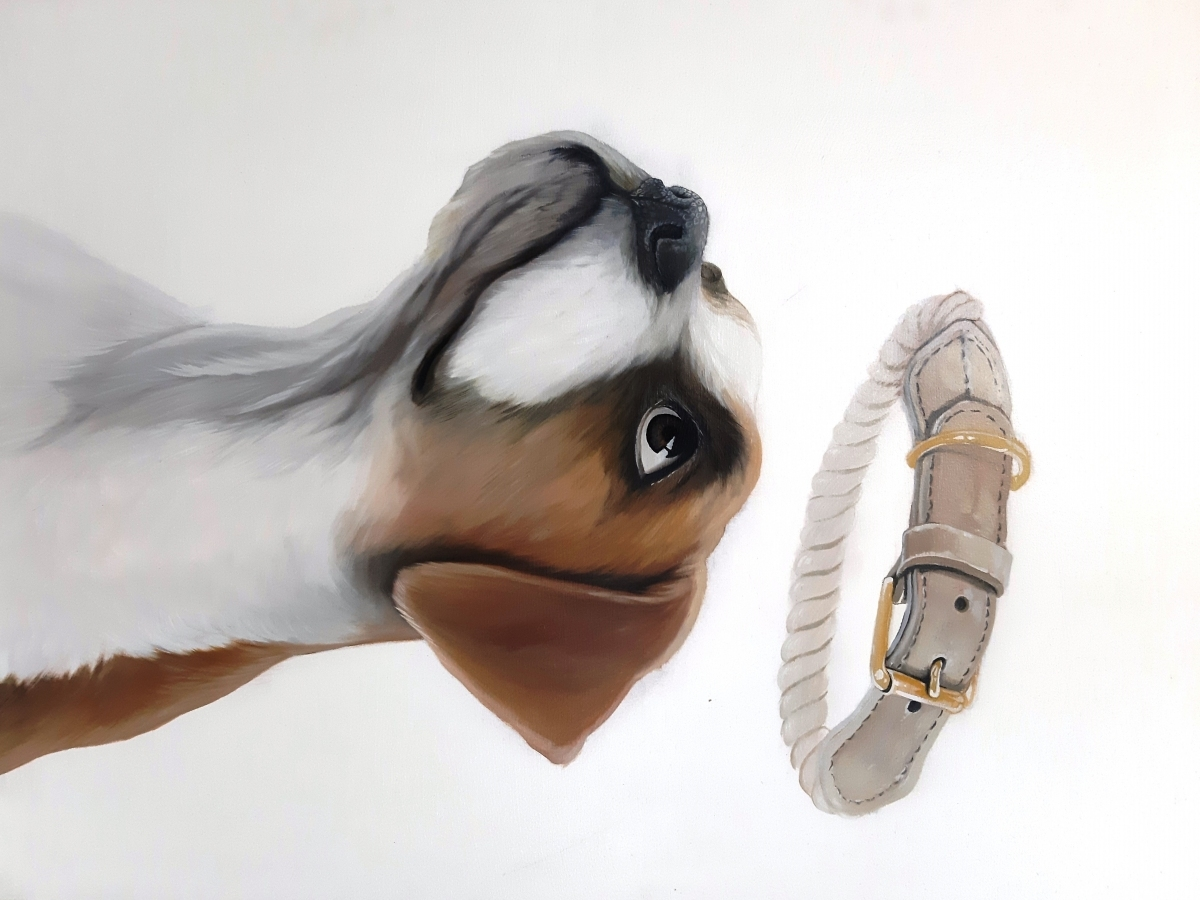 Jilek-pes-s-obojkem